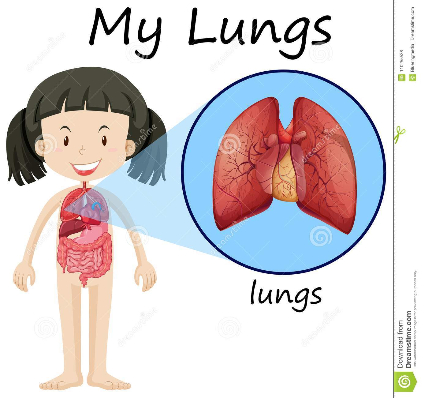 Girl And Lungs On Diagram Stock Vector Illustration Of Educational