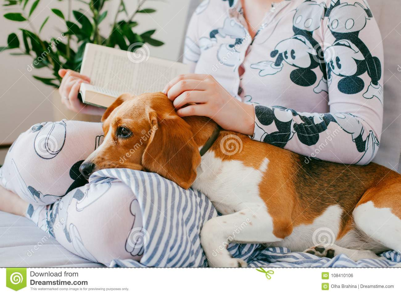 The girl in pajamas is reading a book at home with a beagle puppy dog. Beagle is lies on girl`s knees.