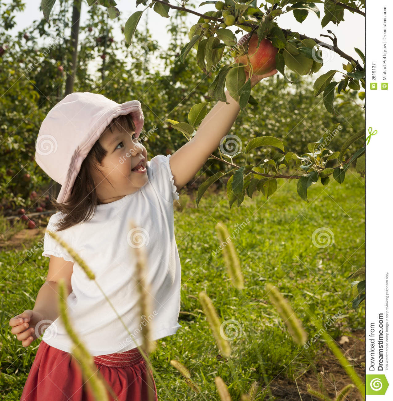Girl Picking Apple Stock Image Image 26191371