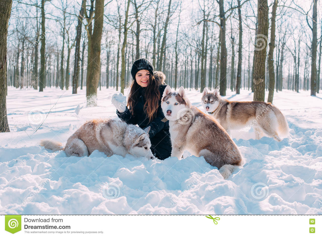 Girl Playing With Dogs In Snow Stock Image Image Of Siberian