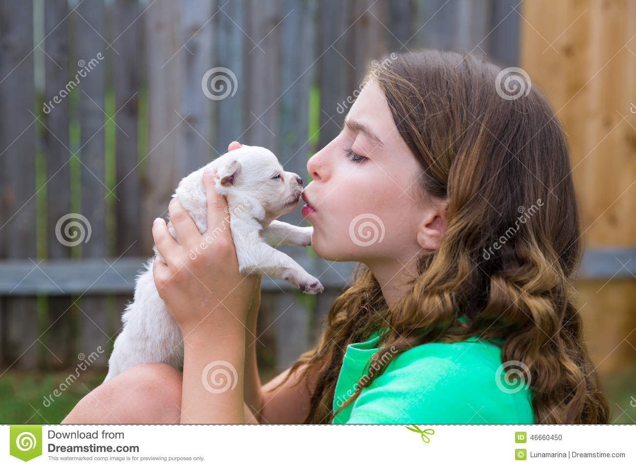 Girl Playing Kissing Puppy Chihuahua Pet Dog Stock Photo Image Of