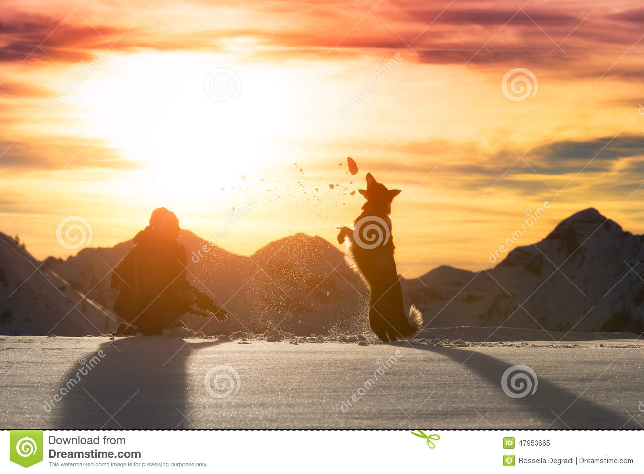 Download Girl Plays With Border Collie Stock Image - Image of active, beautiful: 47953665