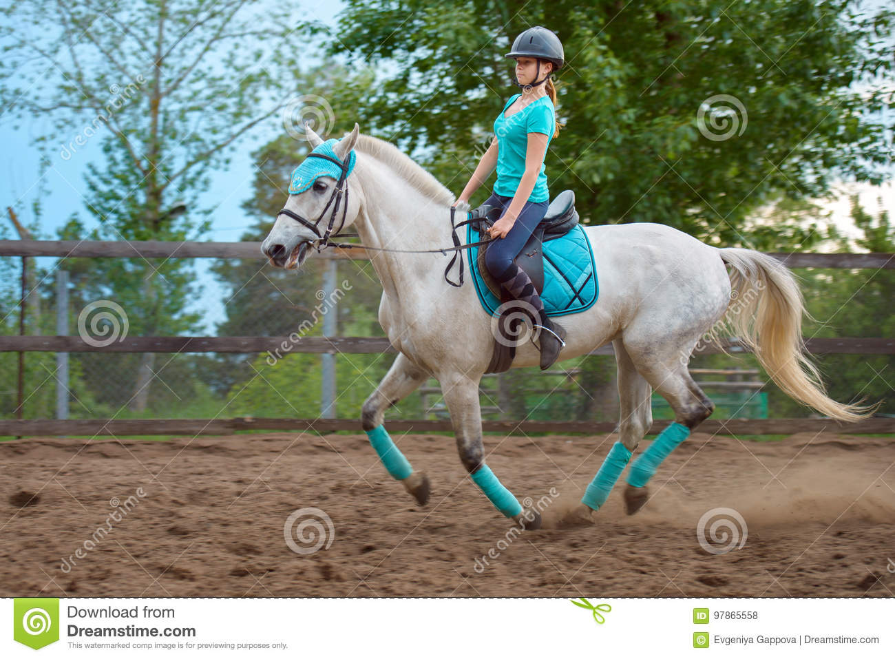 girl rider trains the horse in the riding course in summer day stockgirl rider trains the horse in the riding course in summer day