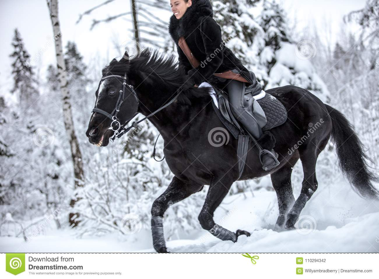 Black Horse Running In Snow On Winter Background Stock Photo Image Of Field Mammal 110294342