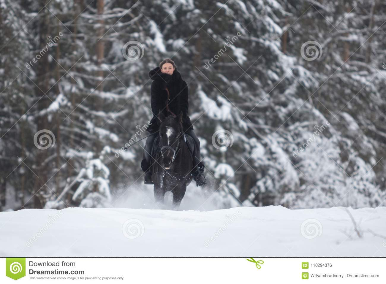 Black Horse Running In Snow On Winter Background Stock Photo Image Of Field Beautiful 110294376