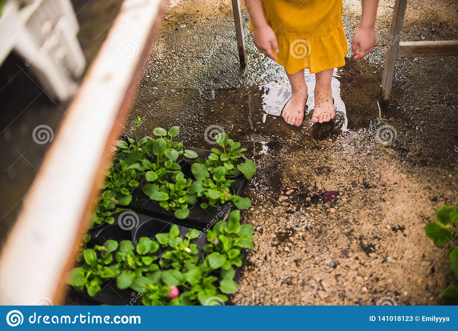 Girl`s bare feet in a puddle