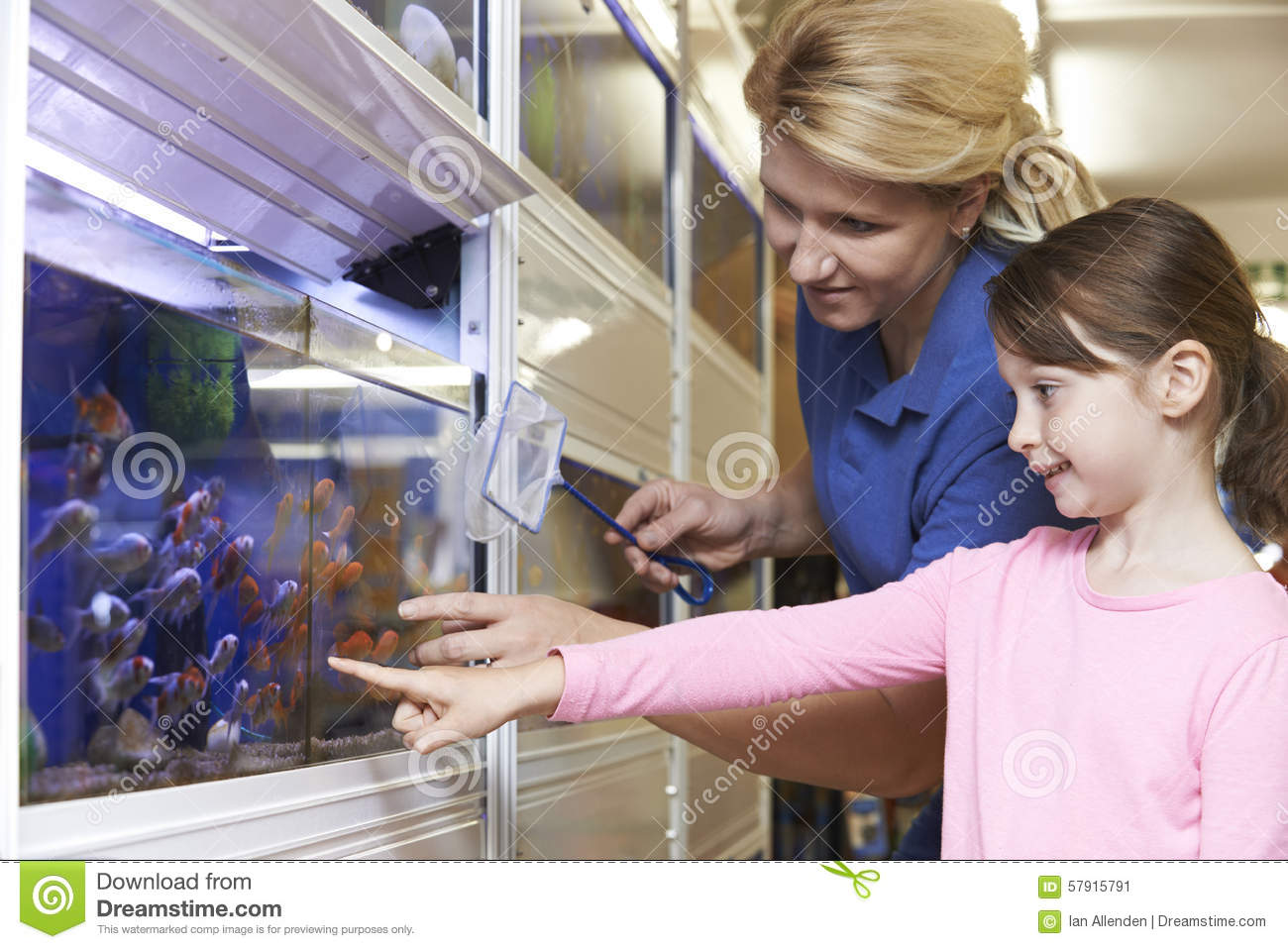 girl s assistant choosing goldfish in pet store stock girl s assistant choosing goldfish in pet store