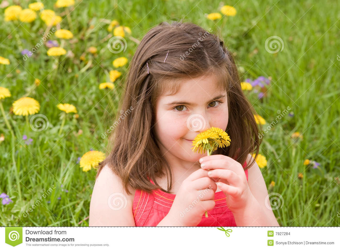 Girl Smelling Flower Stock Images Image 7927284