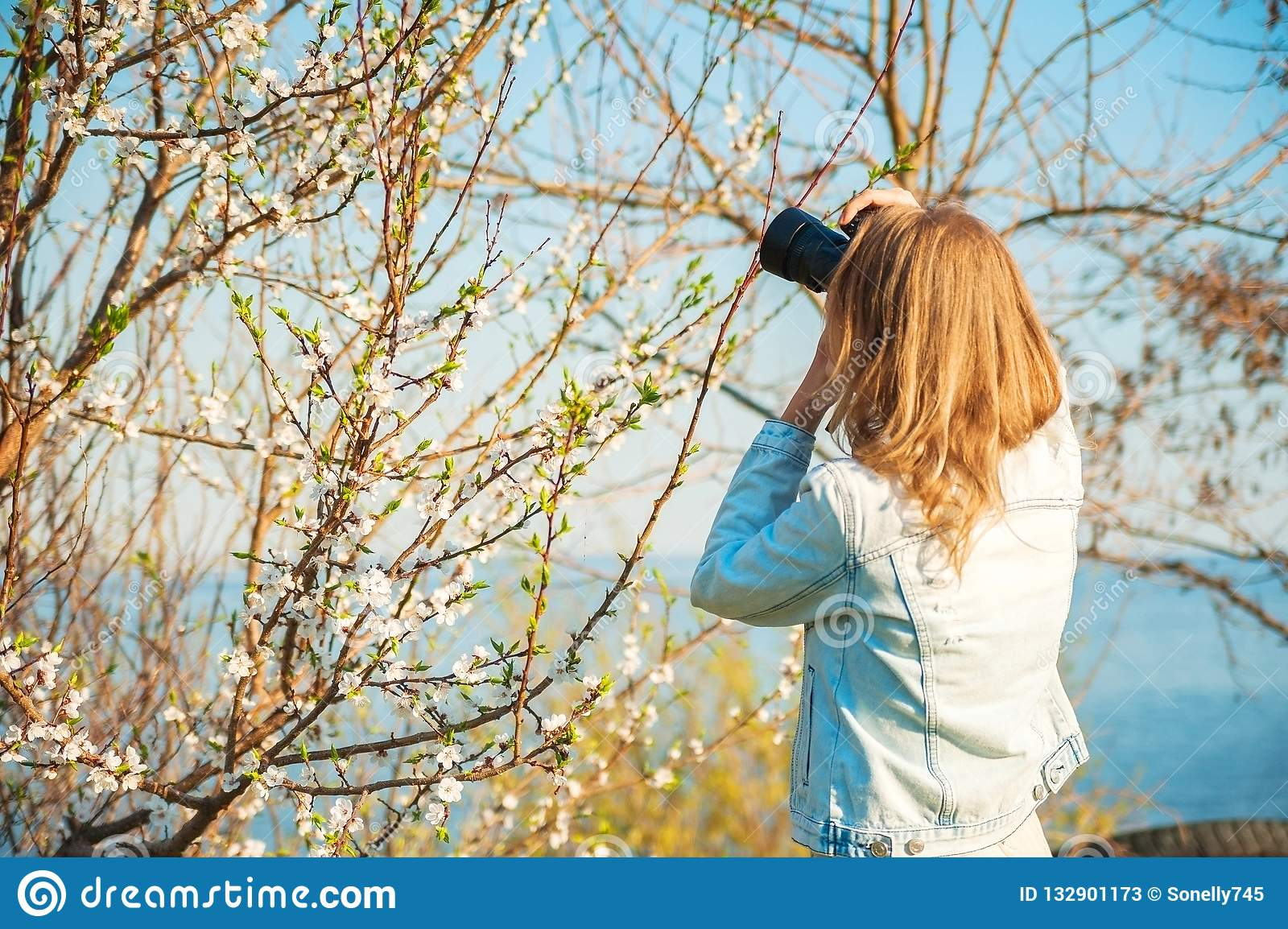 A girl takes pictures of a spring blossoming tree close-up. Natural texture of a tree.