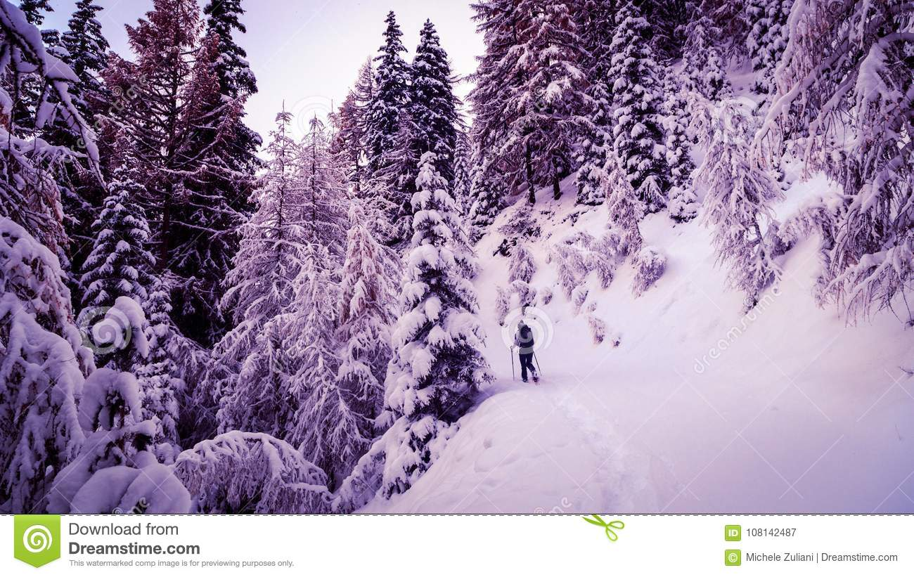 Girl Trekking With Snowshoes In The Wood Stock Image