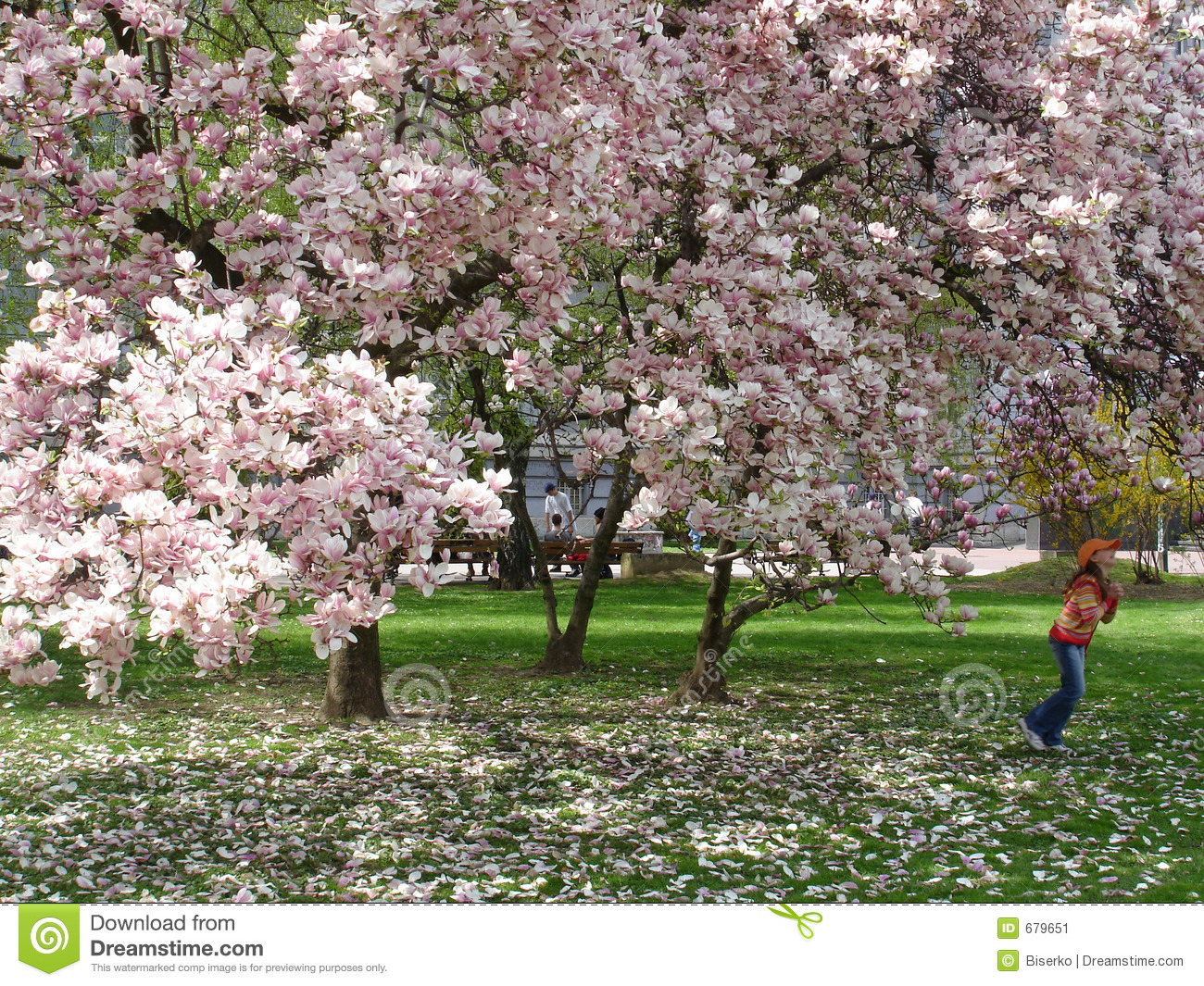 Girl Under Magnolia Tree Stock Image Image Of Blooming 679651