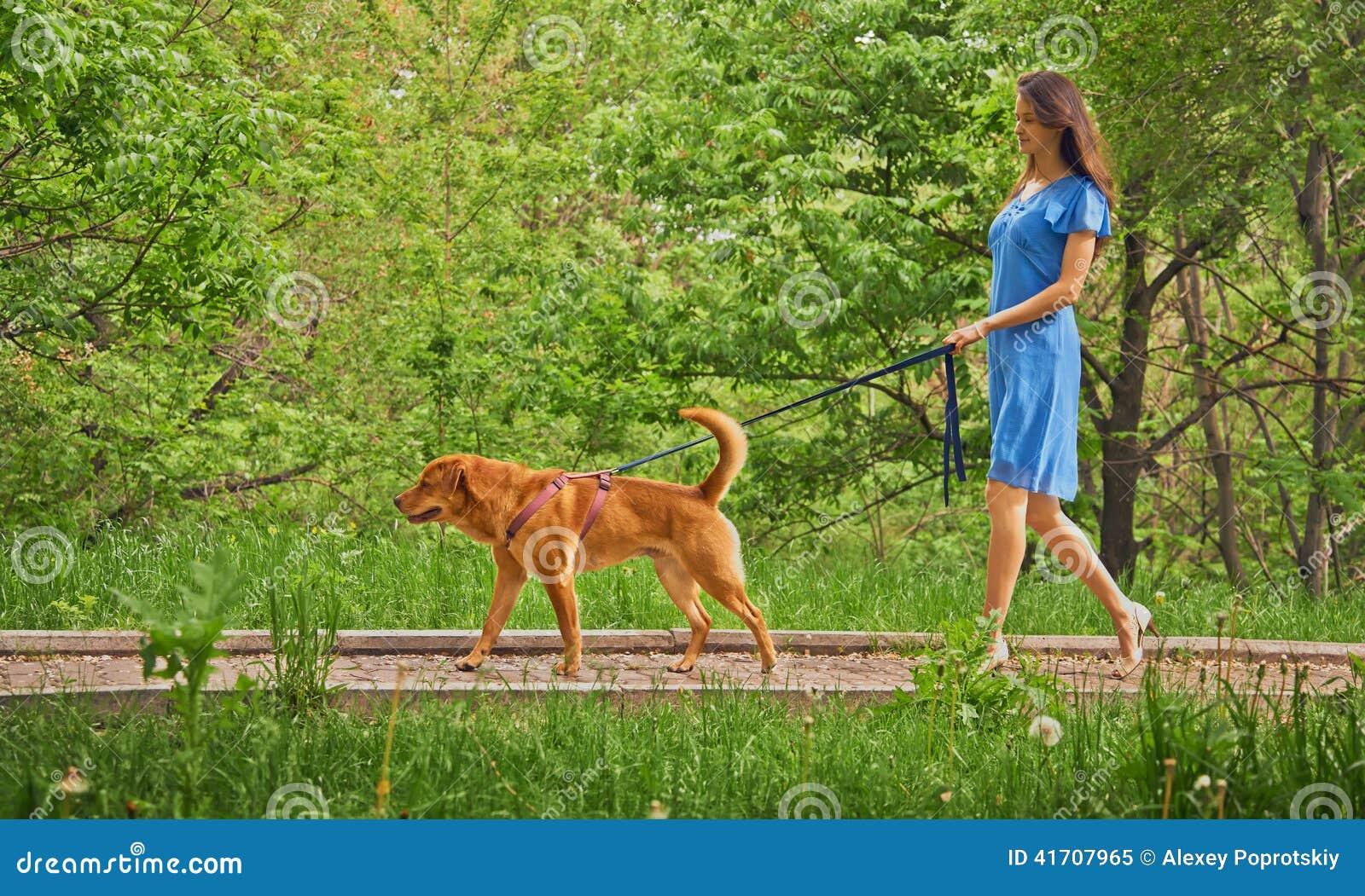 Dans Dog Walking