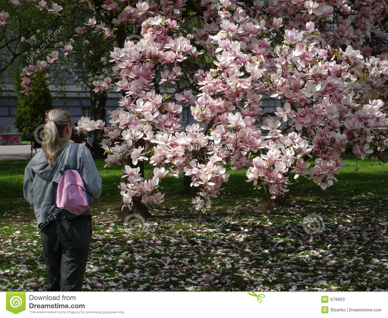 Girl Watching Magnolia Tree Stock Image Image Of Jeans Color 679663