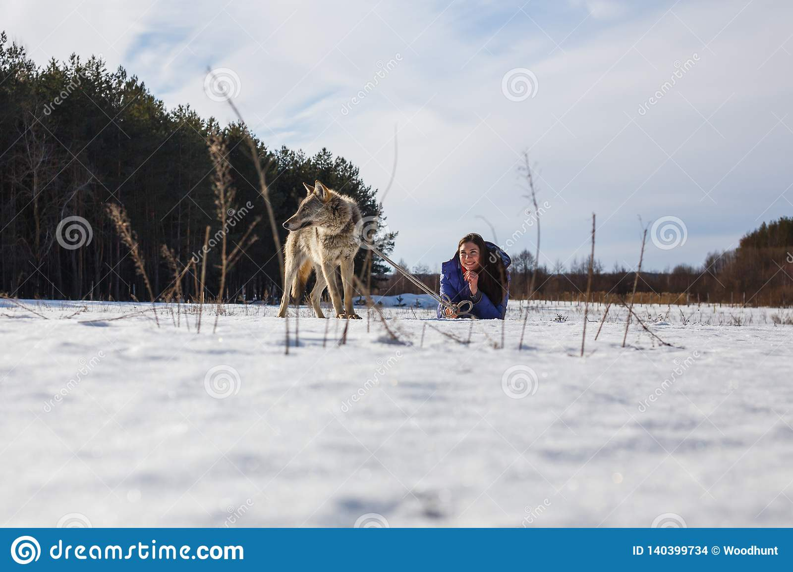 A girl, a wolf and two canine greyhounds playing in the field in winter in the snow