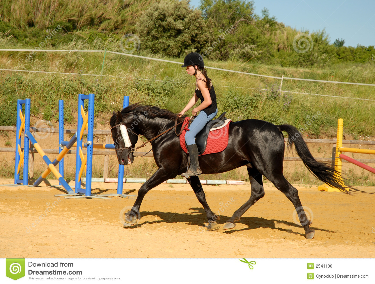 girl and working horse stock photo image of black equestrian 2541130