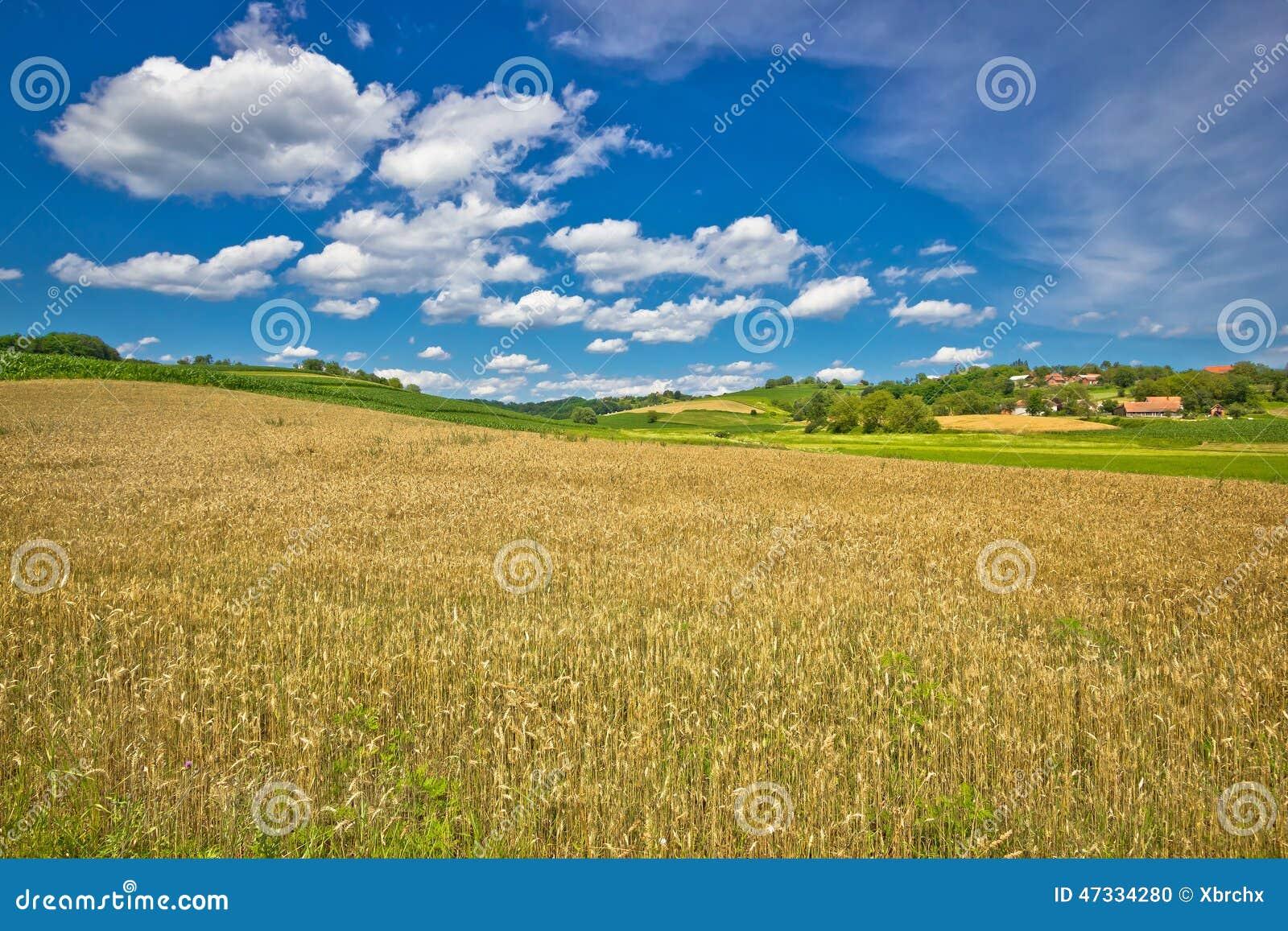 Gisement d or de foin dans le paysage agricole vert