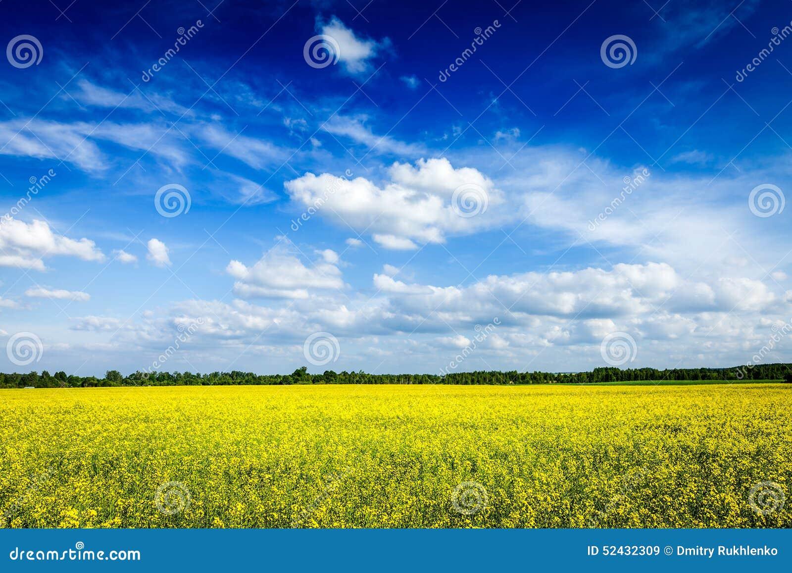Gisement de canola de fond d été de ressort et ciel bleu