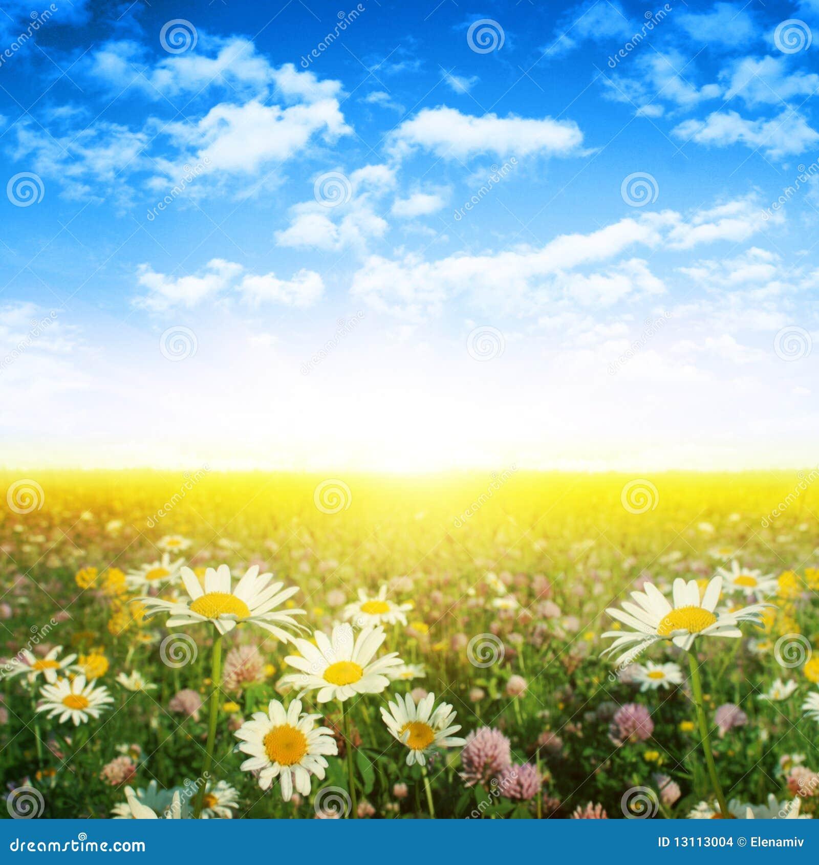 Gisement de fleur le jour d été.