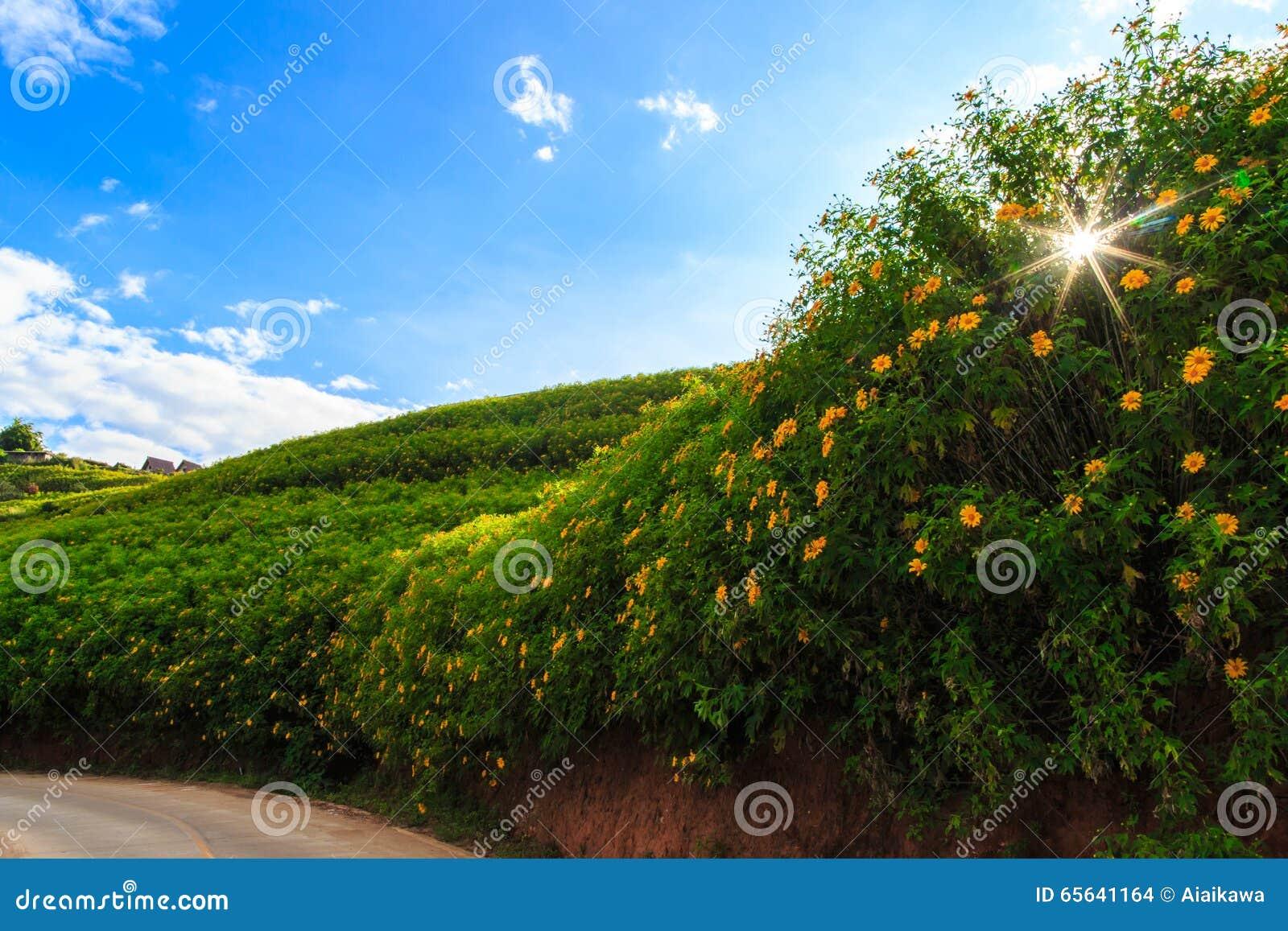 Gisement de fleur sur la montagne tropicale sous le ciel bleu