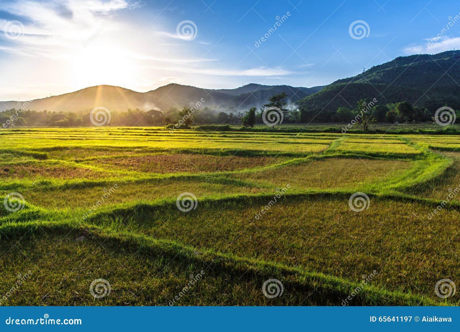 Gisement de riz avec le fond de coucher du soleil de montagne