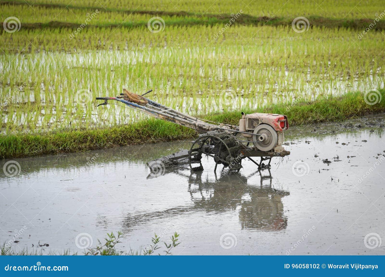 Gisement de riz de charrue de tracteur de talle