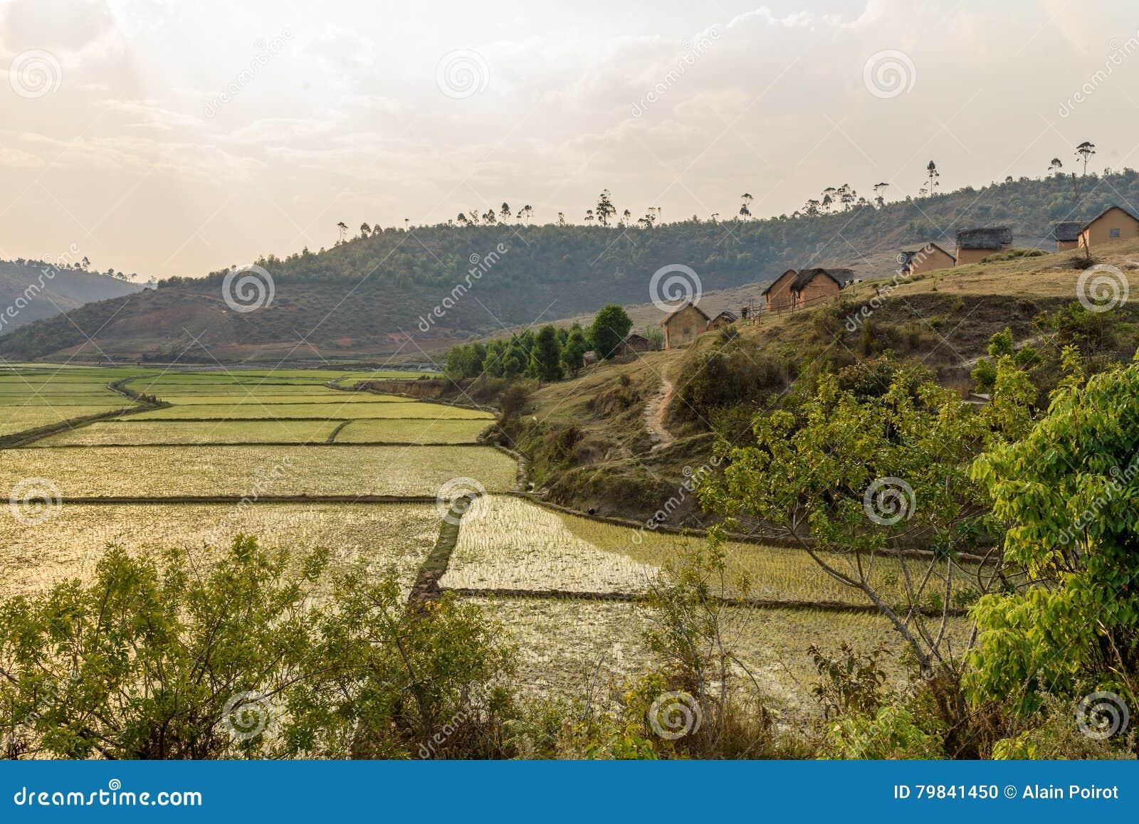 Gisements de riz et déboisement, Madagascar