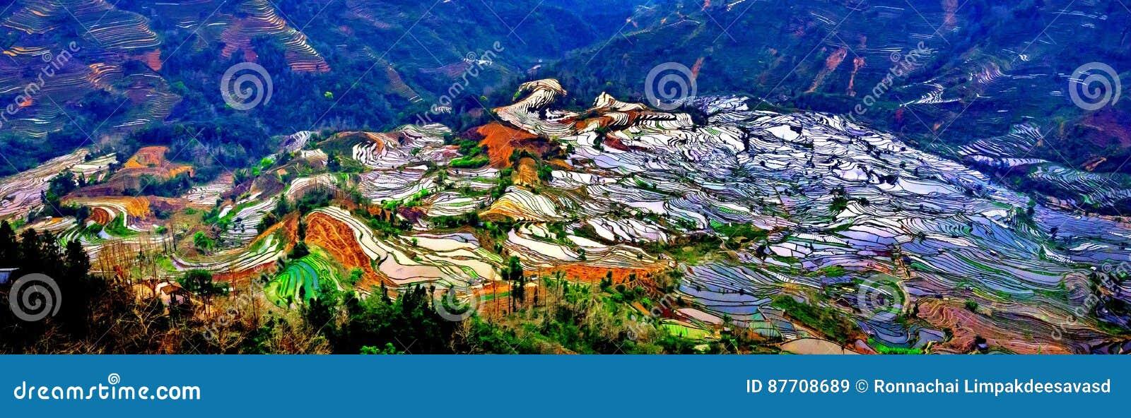 Gisements en terrasse de riz dans Laohuzui Yuanyang