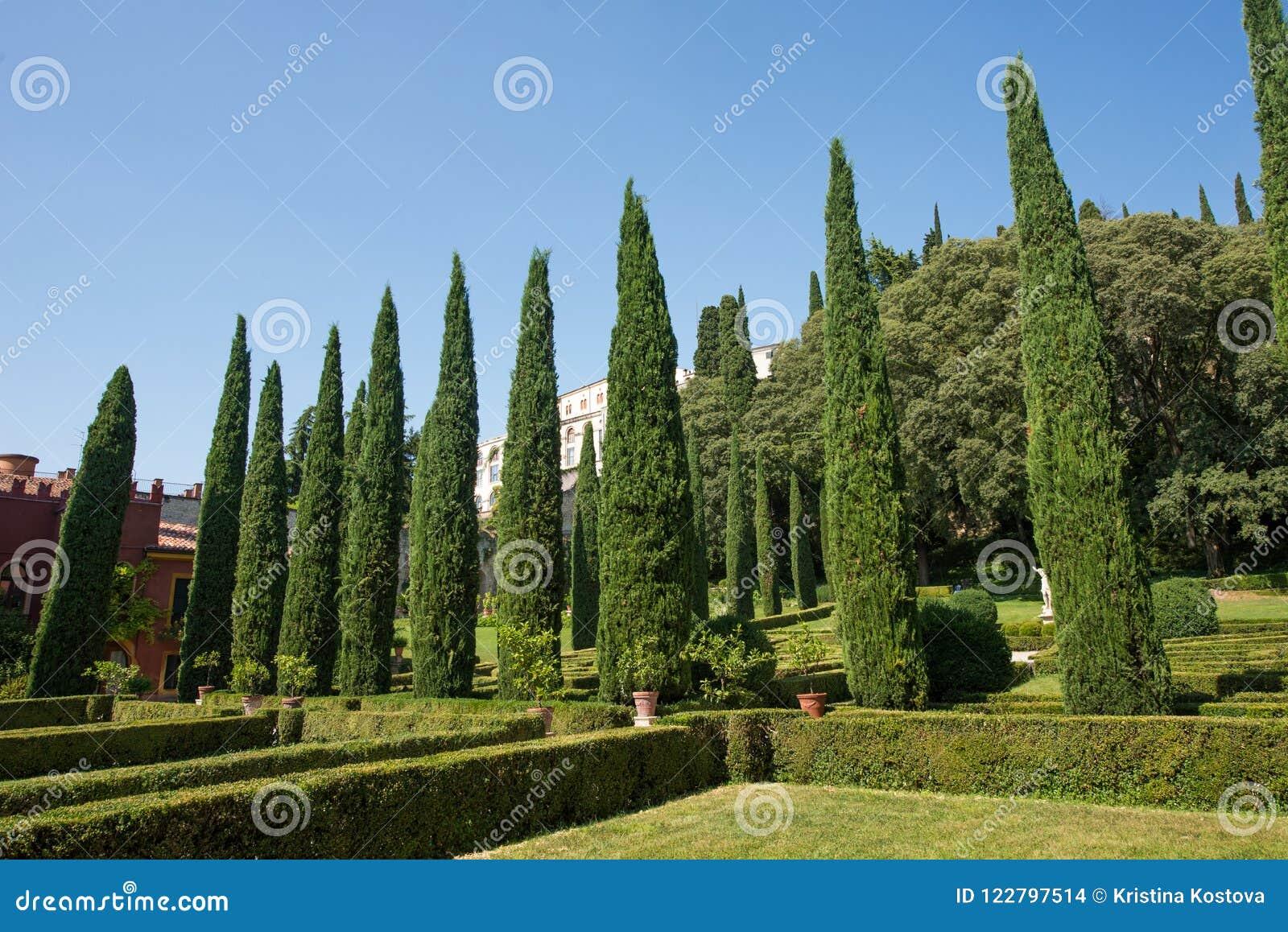 Giusti gardens verona italy tall cypress trees stock photo