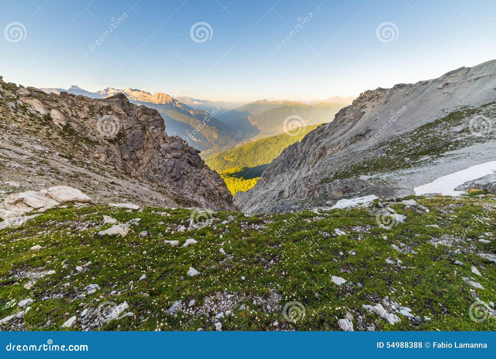 Glödande alpin dal och blomma ängen