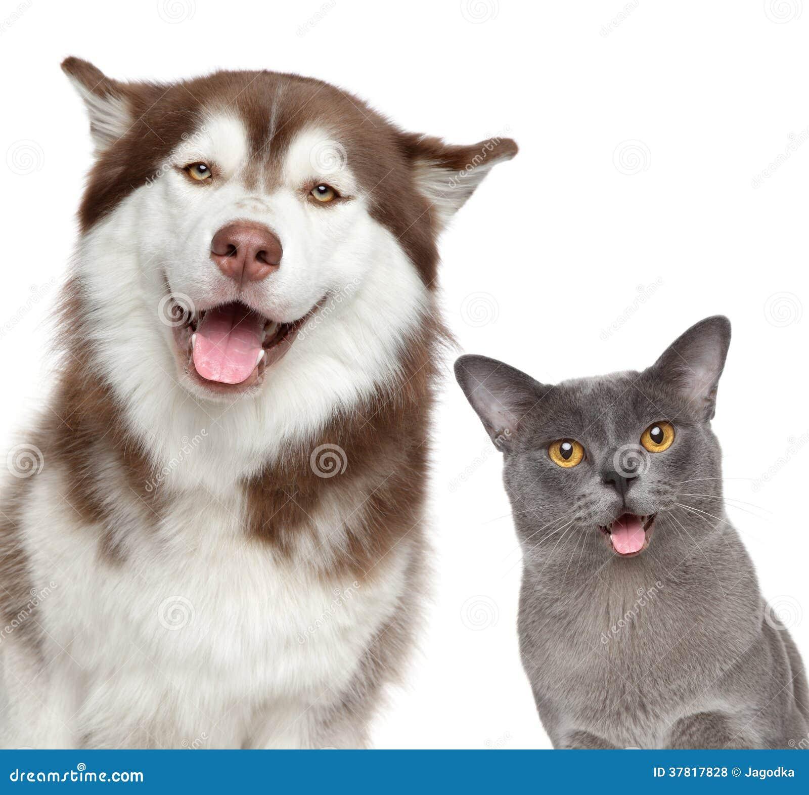 Dia Dog And Cat