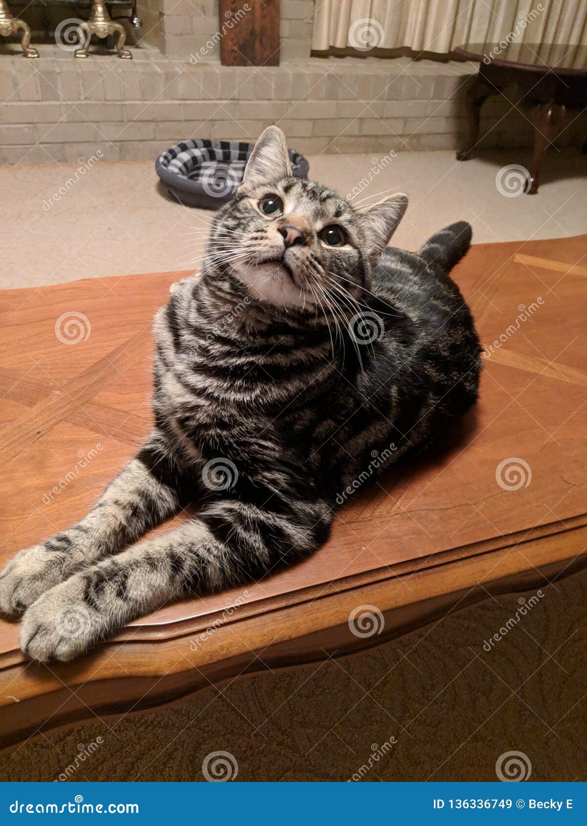 Glückliche Katze, Haustierleben
