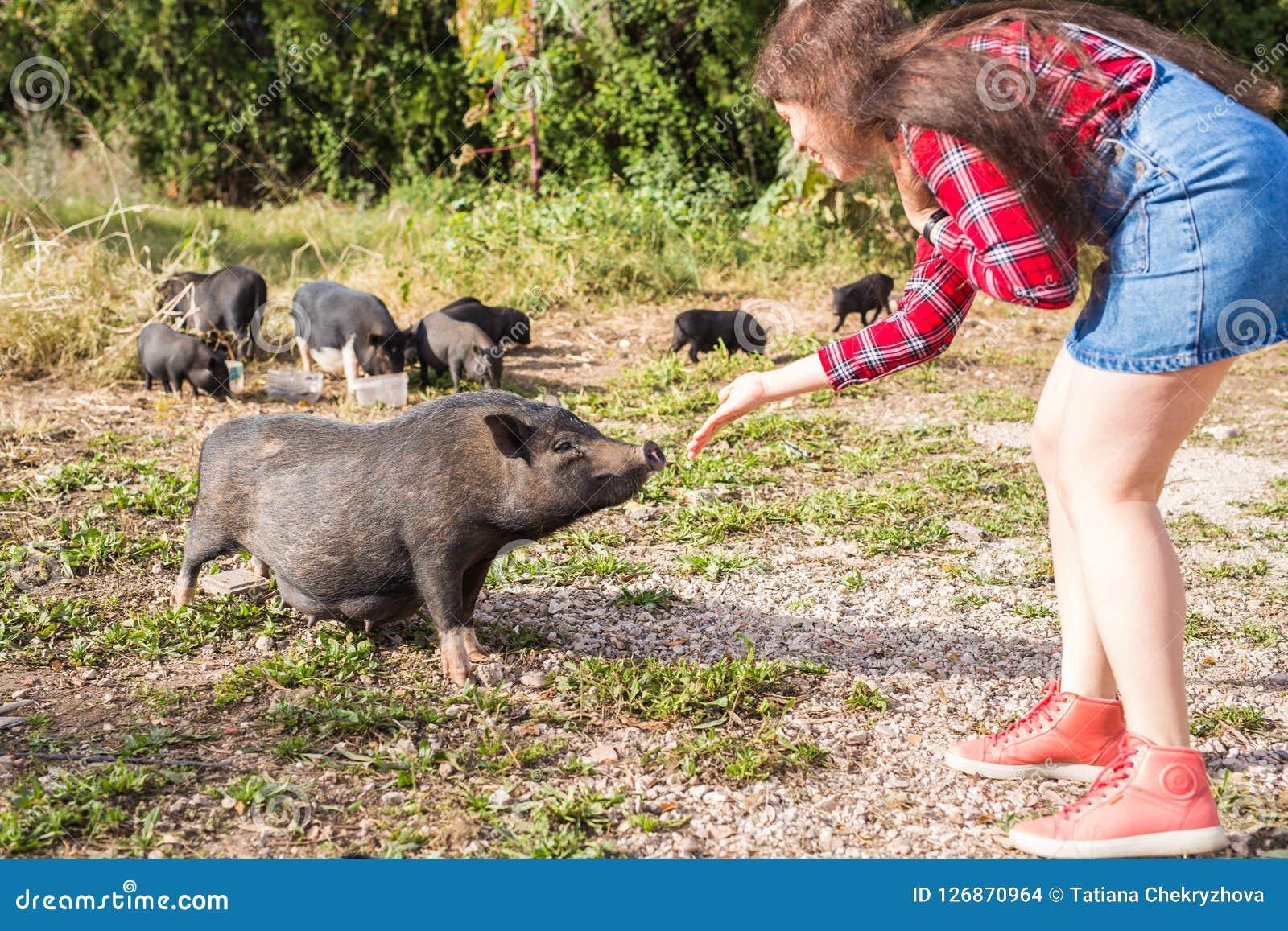 Glückliche Spiele der jungen Frau mit kleinen wilden Ebern auf Natur