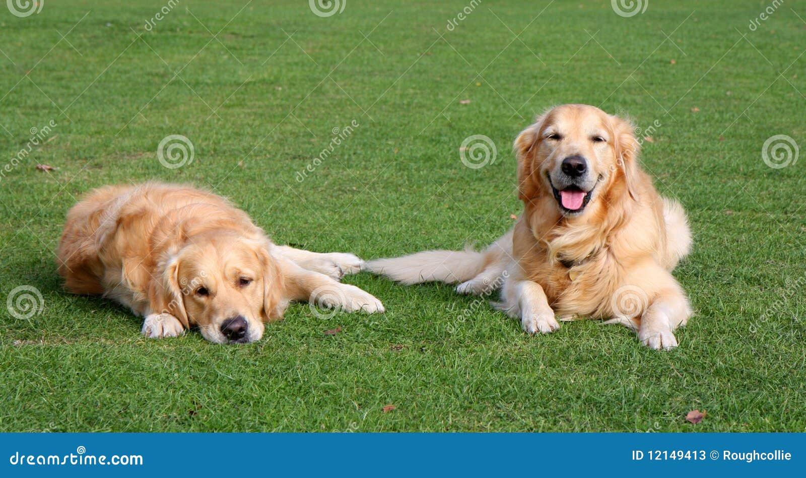 Glückliche und traurige Hunde
