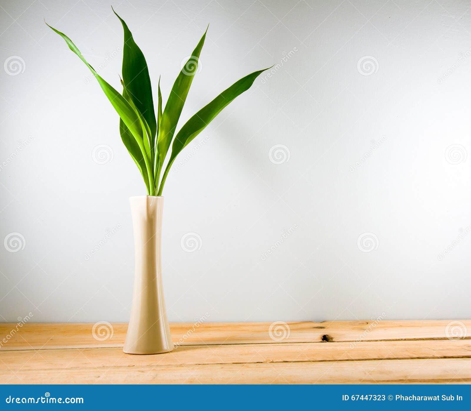 Glucklicher Bambus Dracaena Sanderiana In Einem Crean Vase Auf