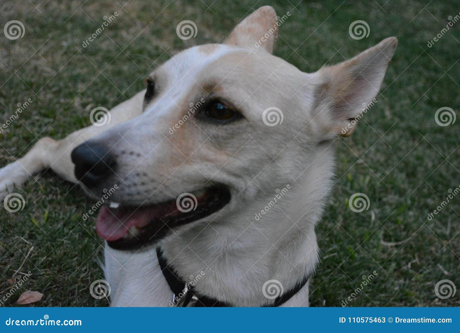 Glücklicher Hund, der weißes nettes kühlt