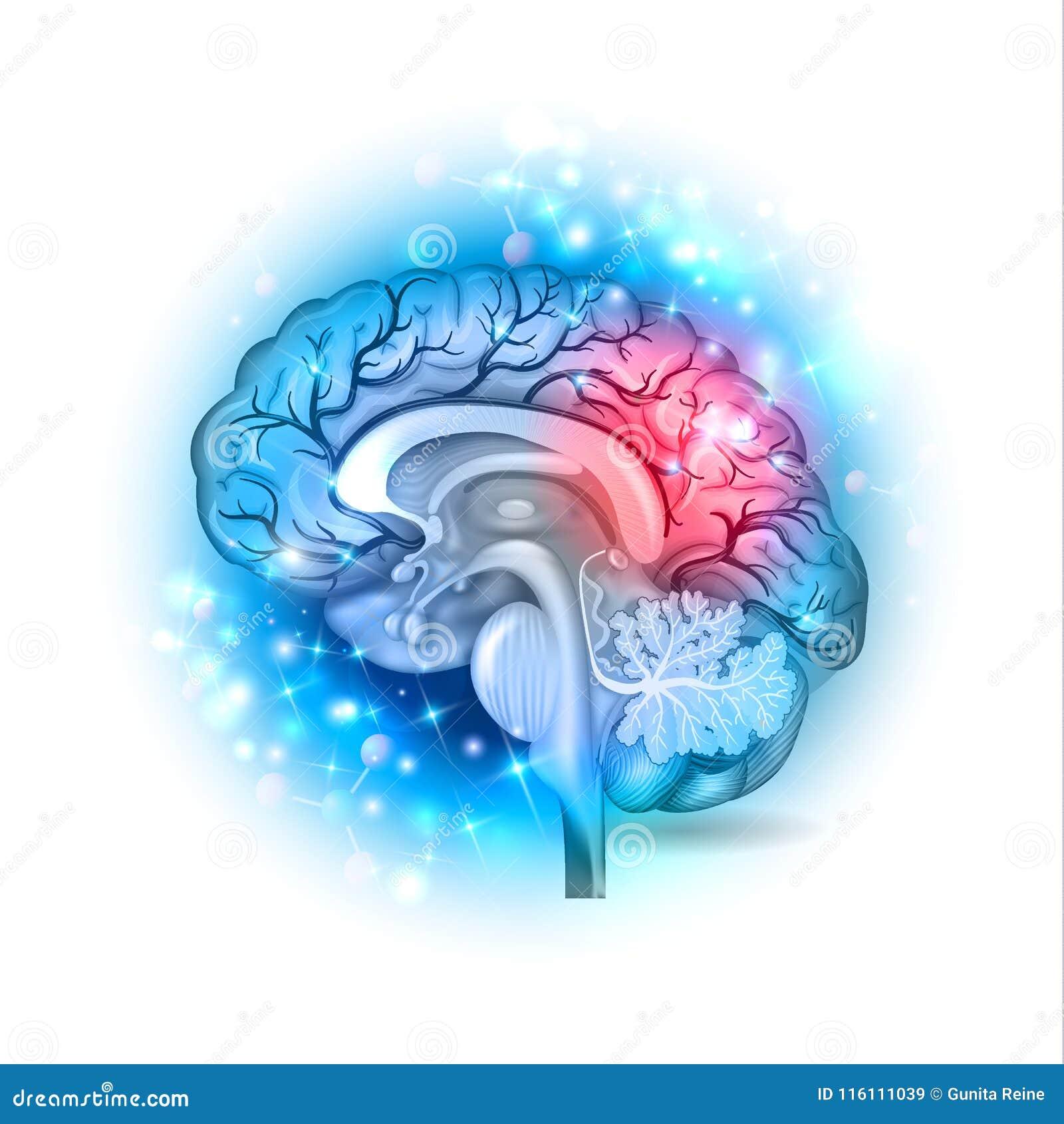 Glühender Hintergrund des menschlichen Gehirns