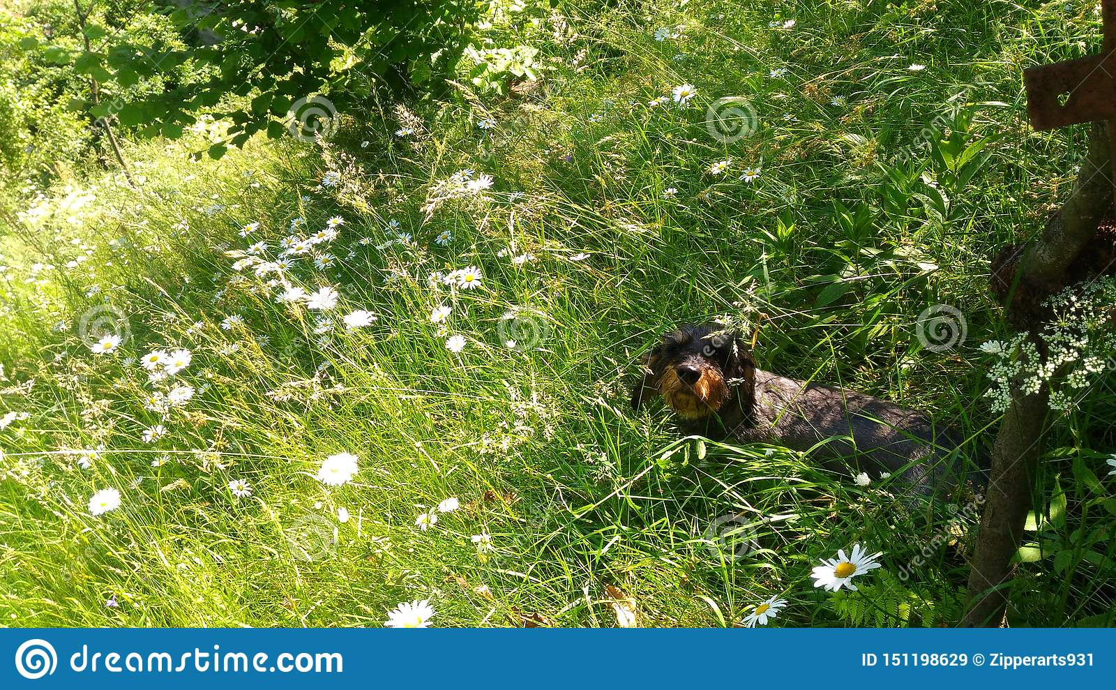 Gl?cklicher Hund auf dem Blumengebiet
