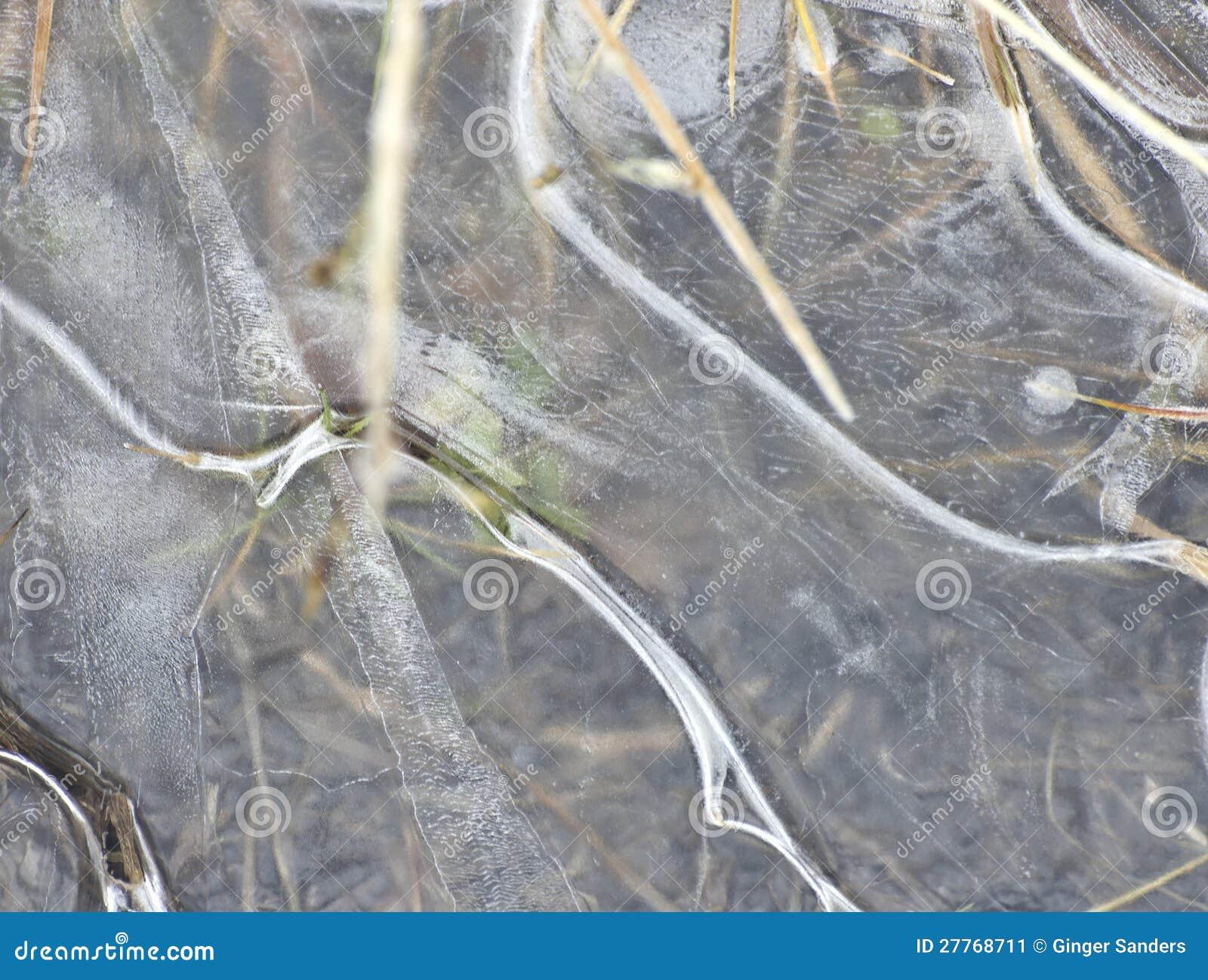 Glace congelée par fond au-dessus de végétation