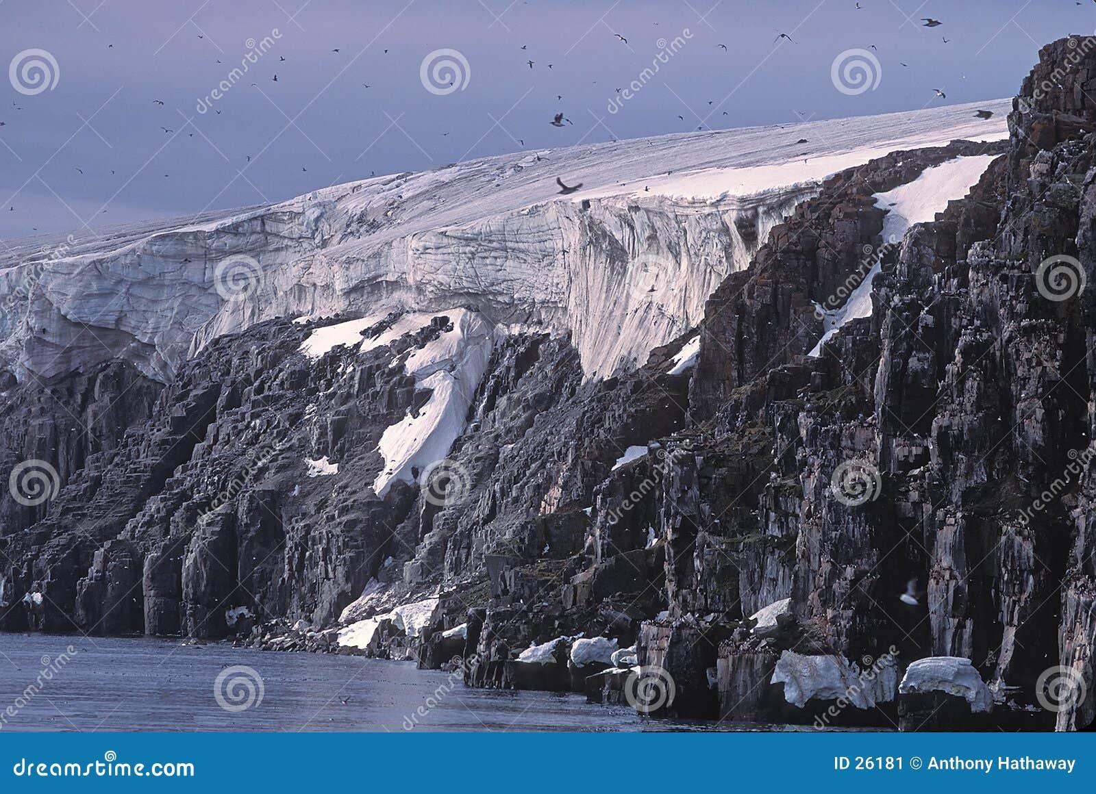 Glaciar, acantilados del pájaro y murres