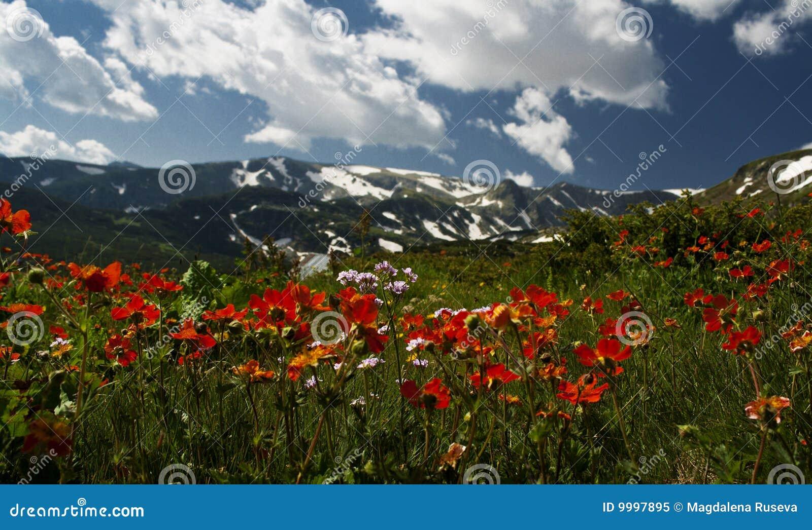 Glade montanhoso