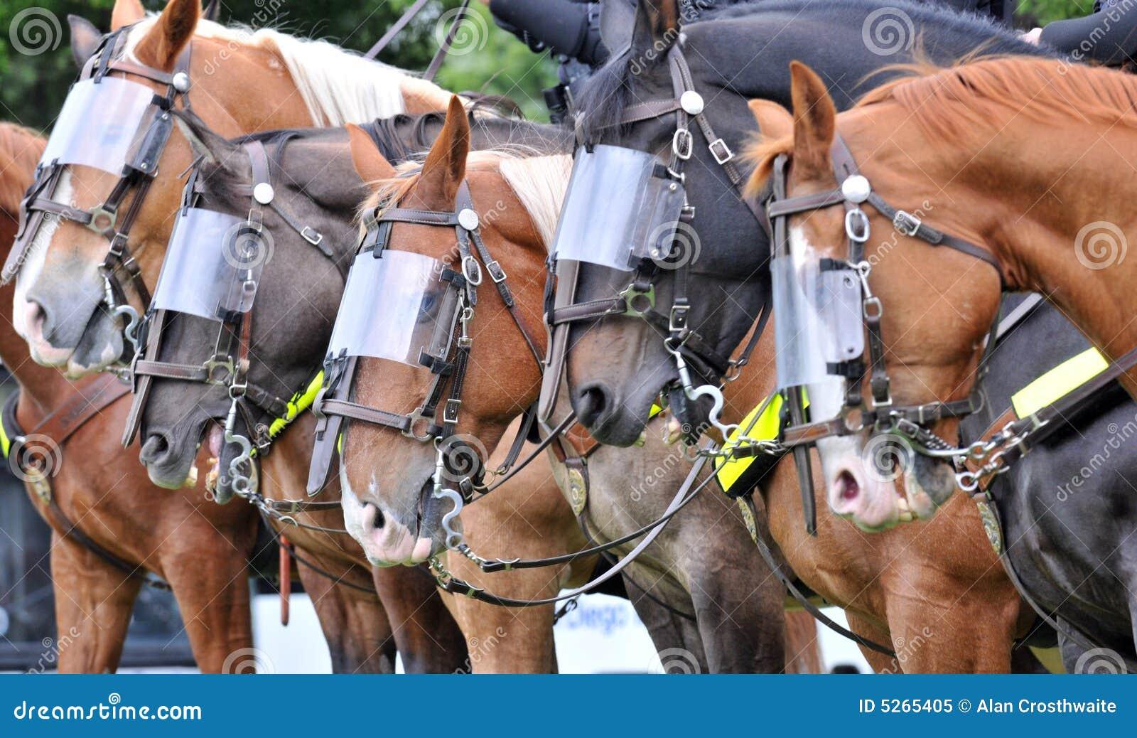Gladiator Horses Stock Image Image Of Protect Criminals 5265405
