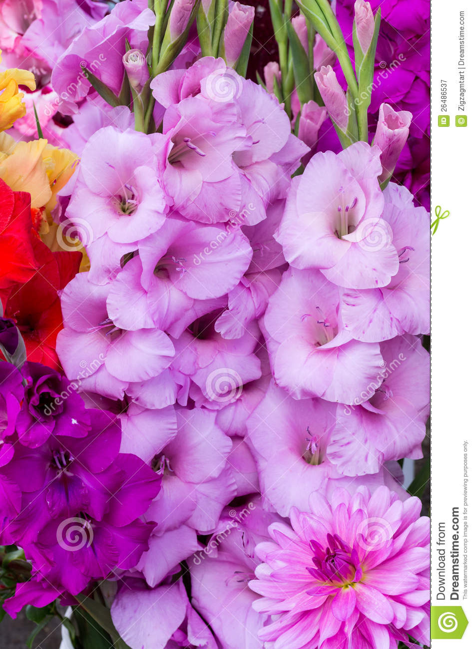 Gladiolus Flowers In Full Bloom Royalty Free Stock