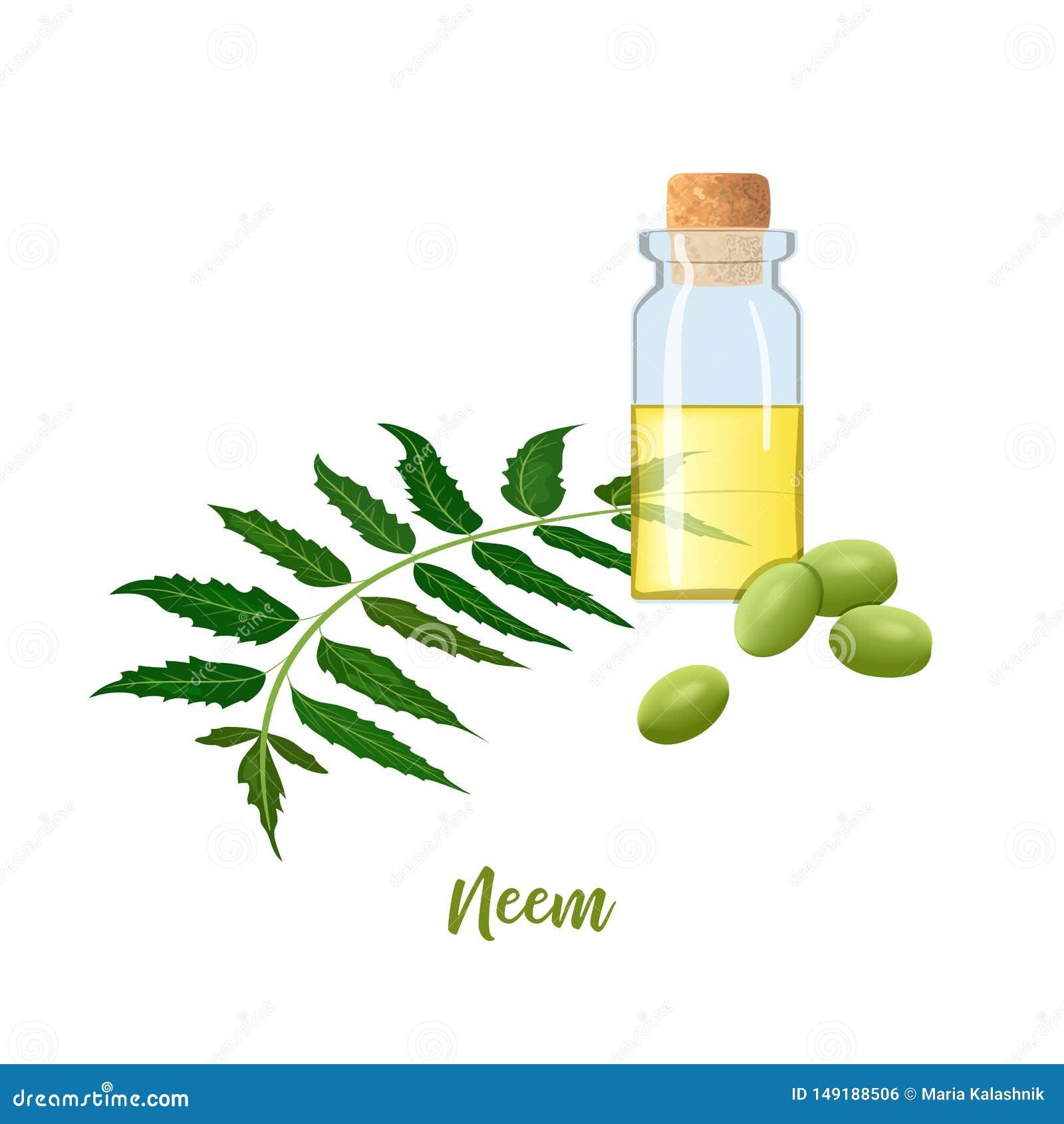 Glasfles met cor, Neem-olie, bladtak, bloemen en peulen Ayurvedakruid flesje Oilplant voor geneeskunde, schoonheidsmiddelen