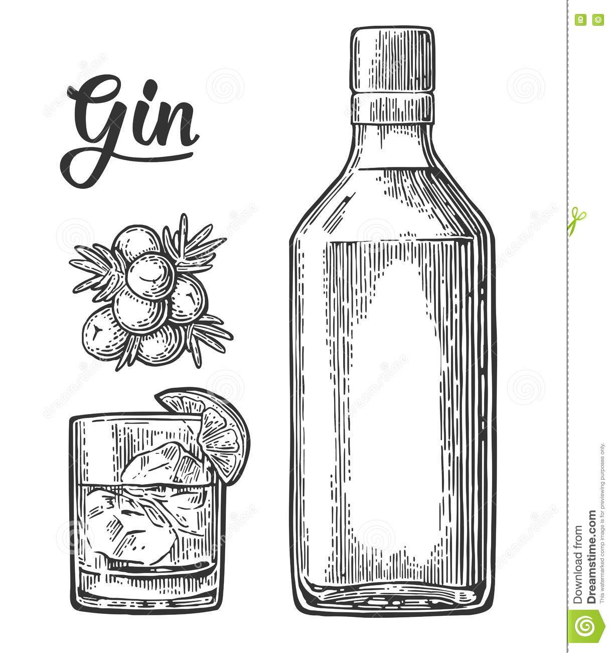 Free Vector Illustration Juniper: Glass And Bottle Of Gin And Branch Of Juniper With Berries Stock Vector