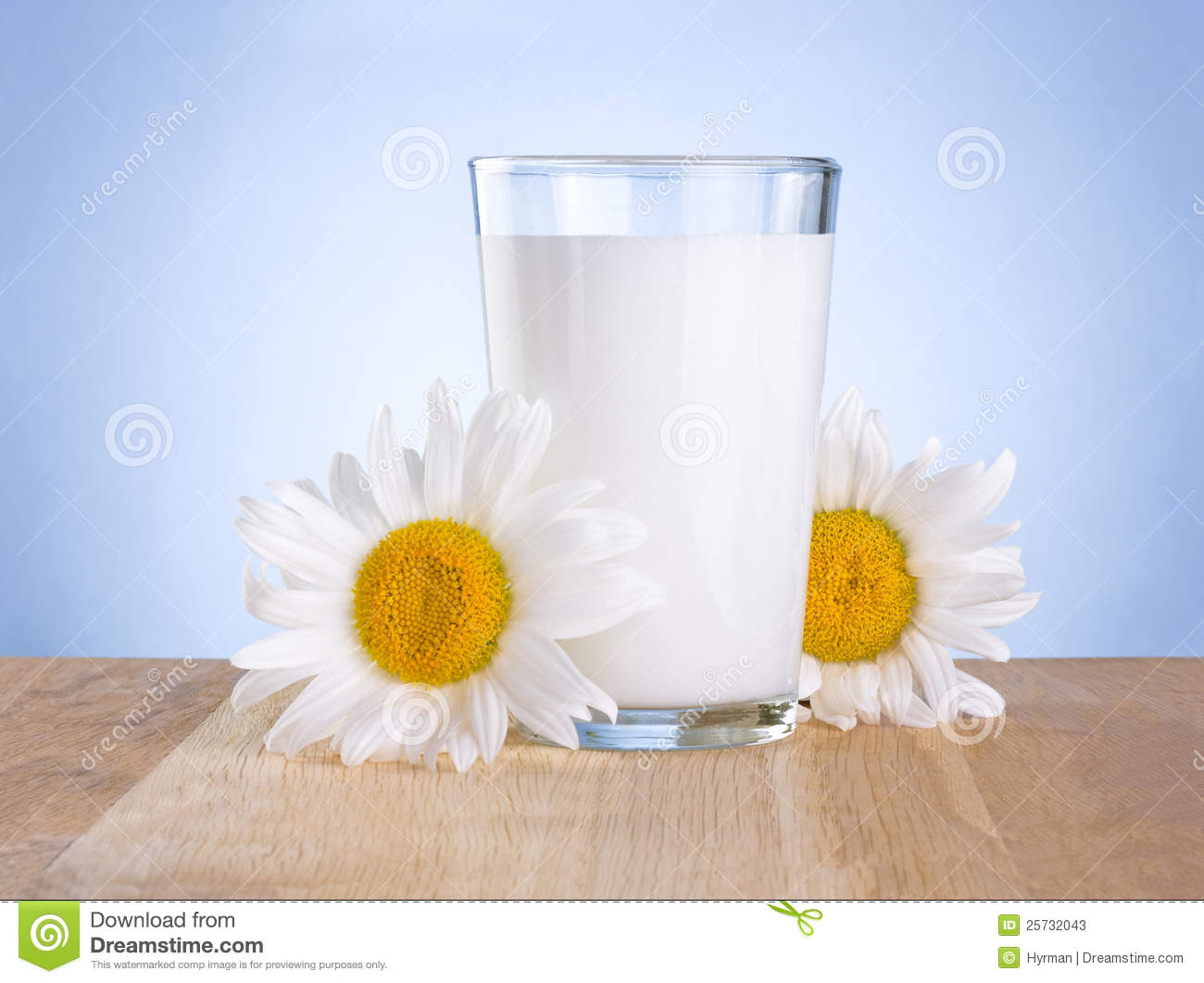 Glass milk and two chamomile is wooden table