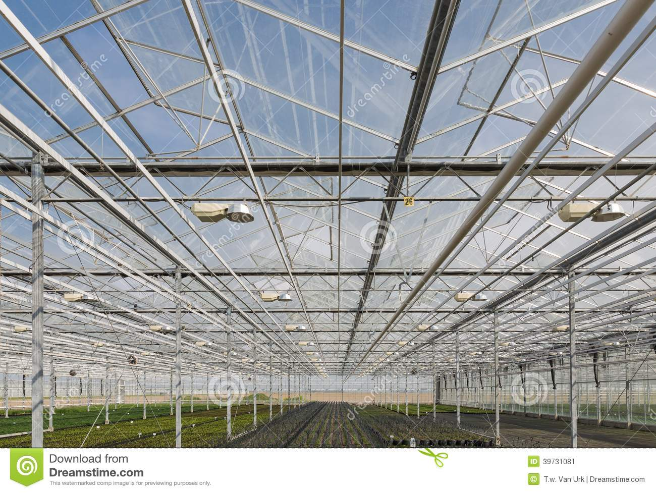 Glass Roof Of A Big Dutch Greenhouse Stock Image Image