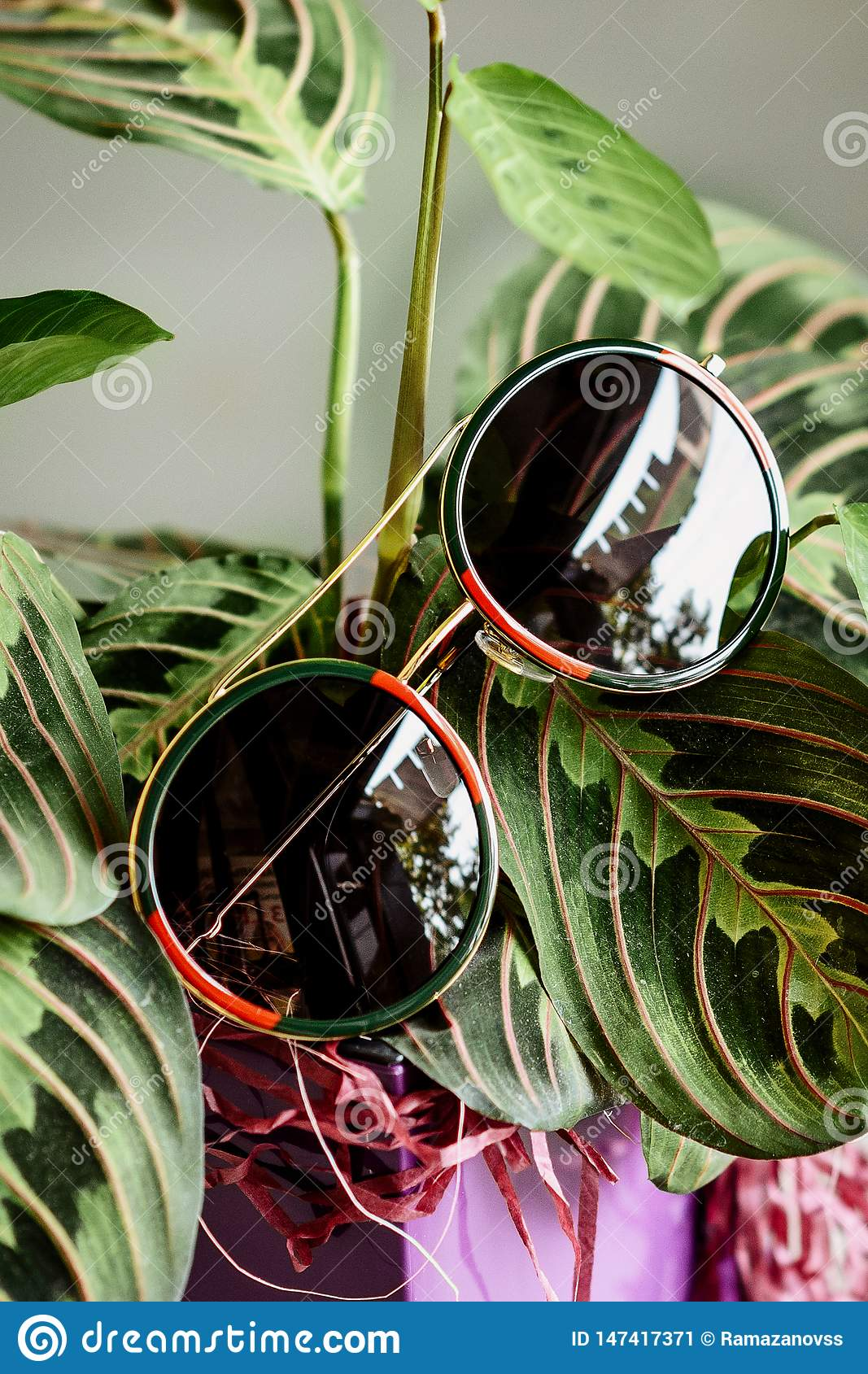 Glasses in a metallic red-green frame on the leaves of the plant