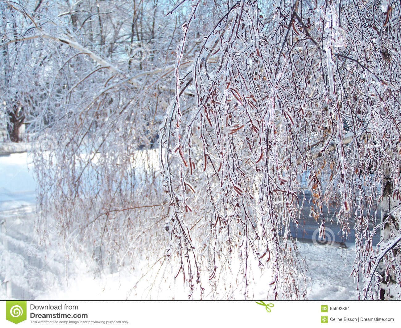 Glazed Tree Branch After Winter Ice Storm-Stock Photos Stock Photo ...