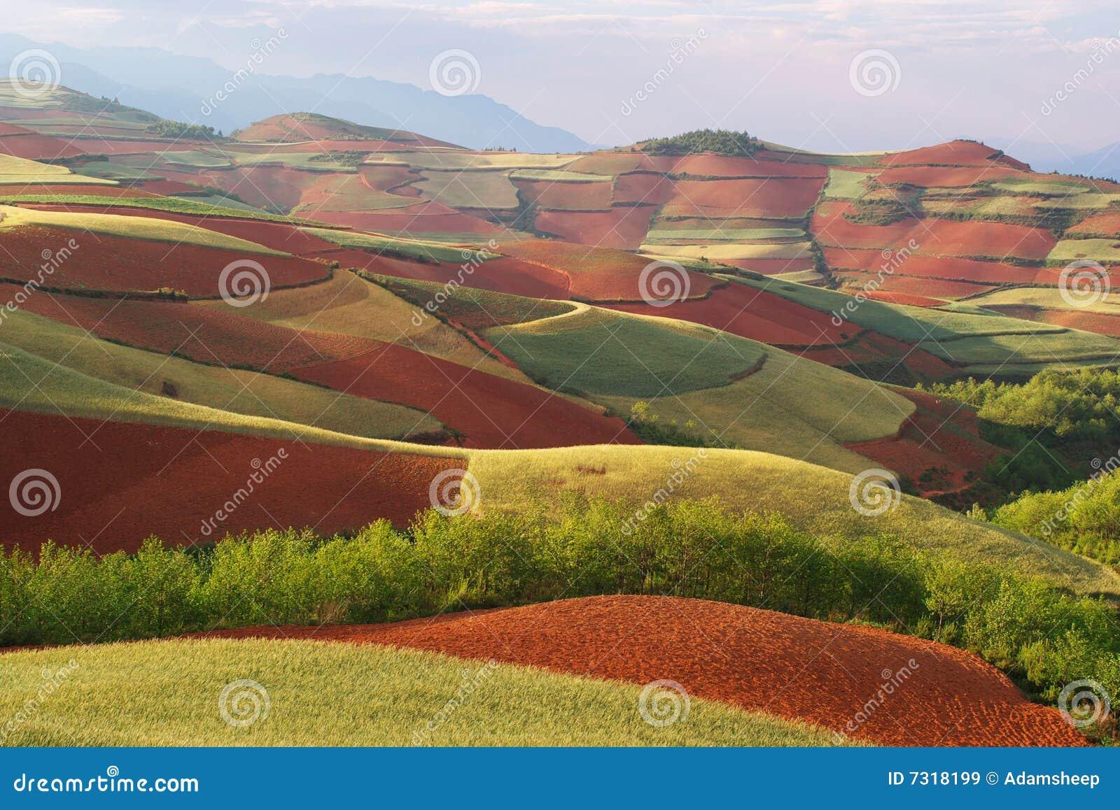 Glebe di colore