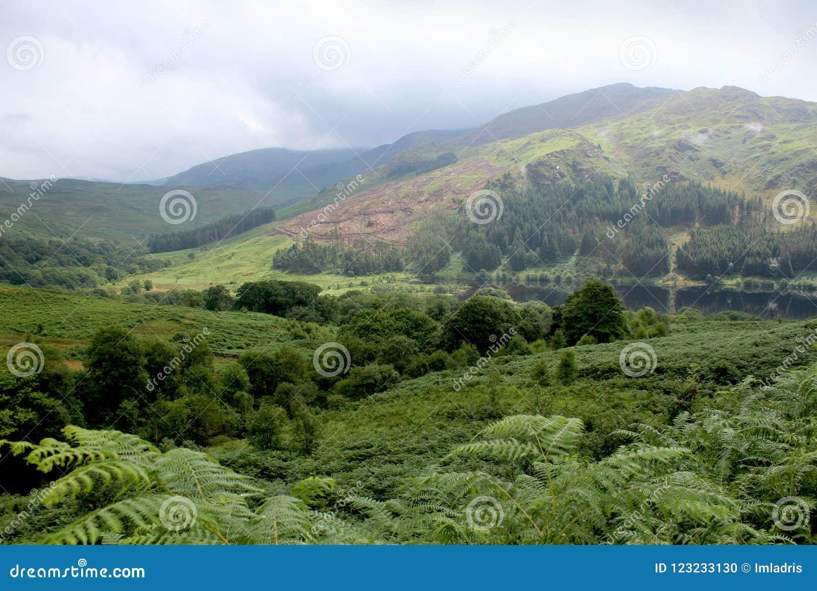 Glen Trool Galloway Forest Park, Skottland
